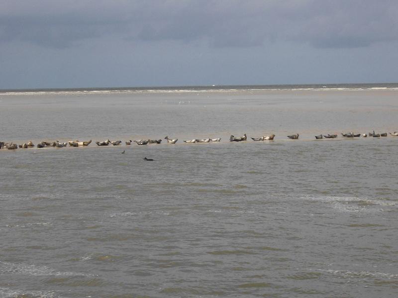 Wangerooge Seehundbank