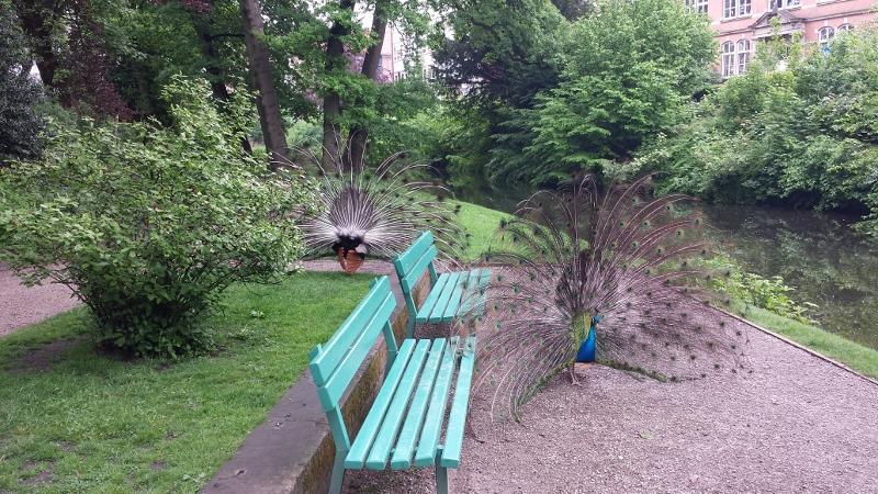 Jever Schlosspark
