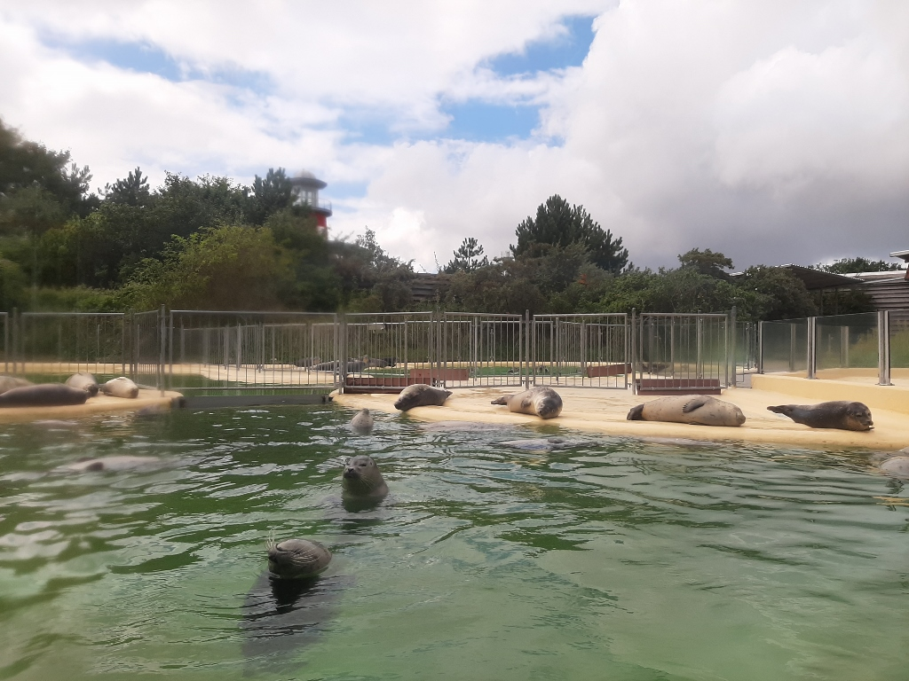 Norddeich Seehundstation