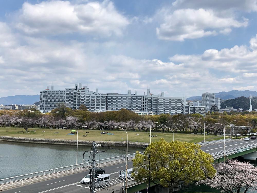 本川河川敷の桜並木・通路からの眺望
