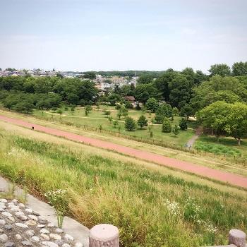 東村山市  狭山公園