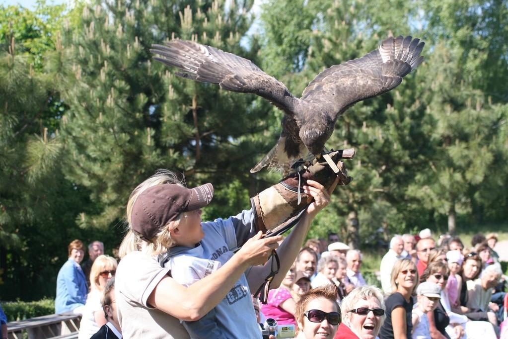 Flugschau  im Vogelpark Marlow