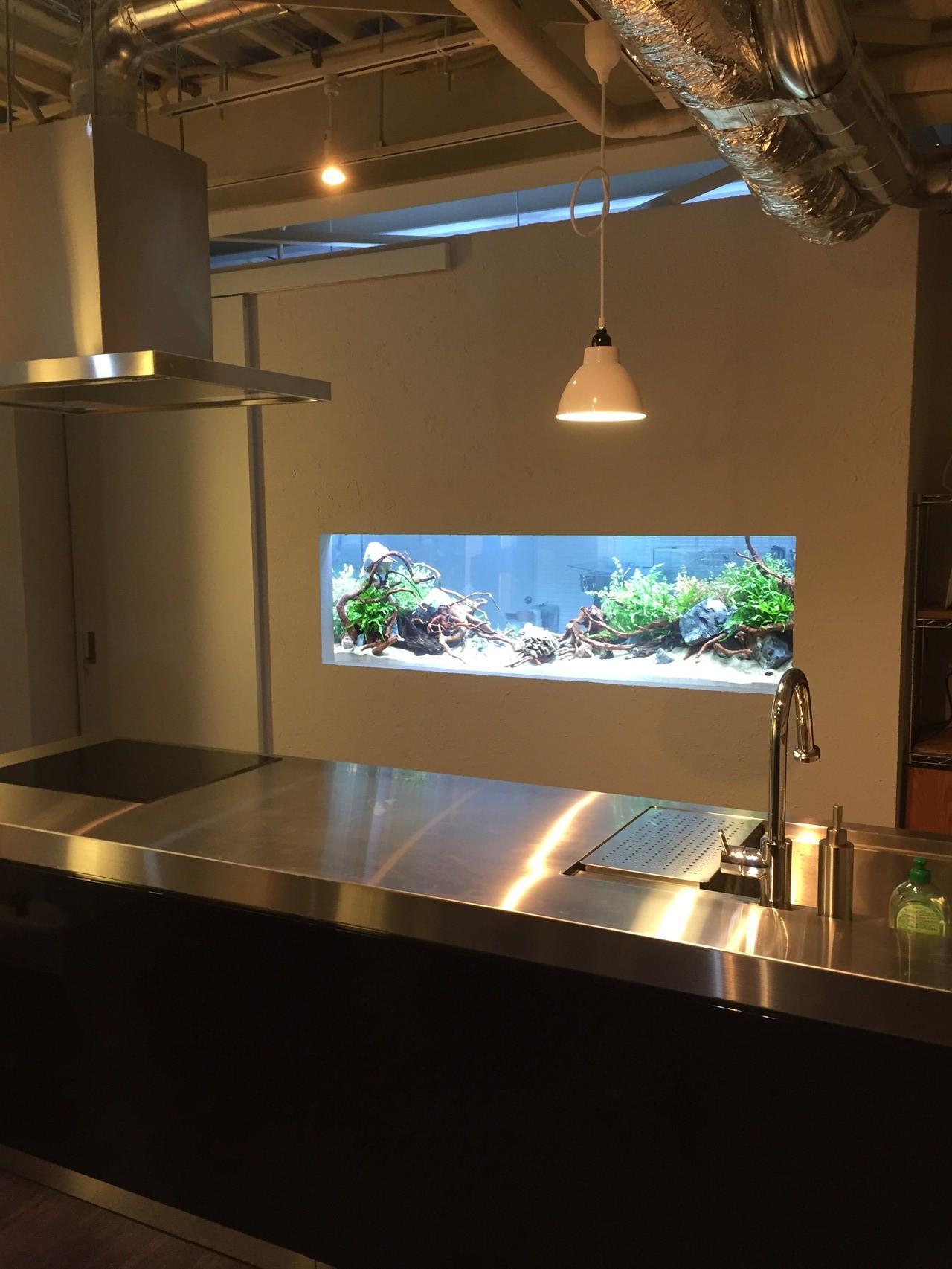 中野のキッチンスタジオが完成しました。正面の壁には、大きな水槽が組み込まれています。