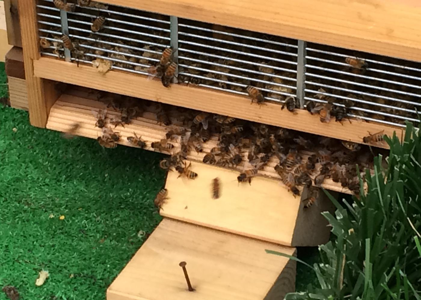 ミツバチたちの住まい まだ周りを警戒しています。