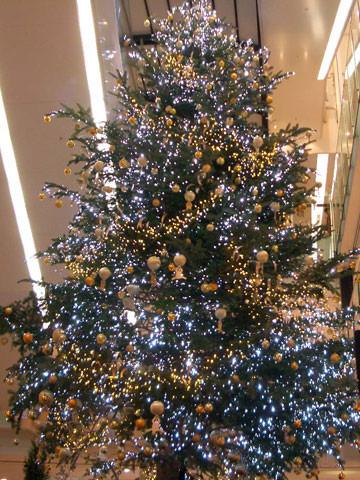 こんな立派なクリスマスツリーの下でのライブです。