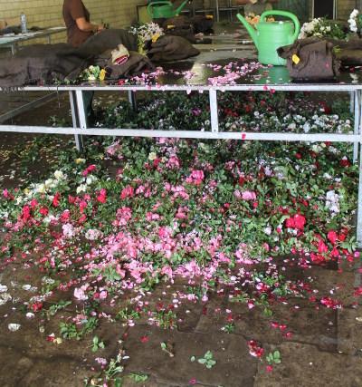 ... die schönen Blüten sind Abfall.