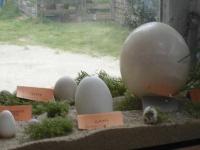 ein Straußenei im Vergleich zu anderen Eiern