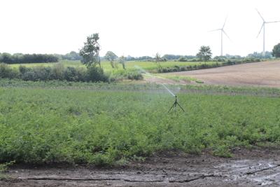 Ein Feld Wildrosen für die Unterlage.
