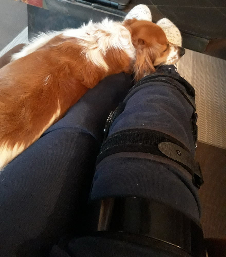 Frauchen ist verletzt und muß viel Ruhen, ich liege jeden Tag bei ihr!