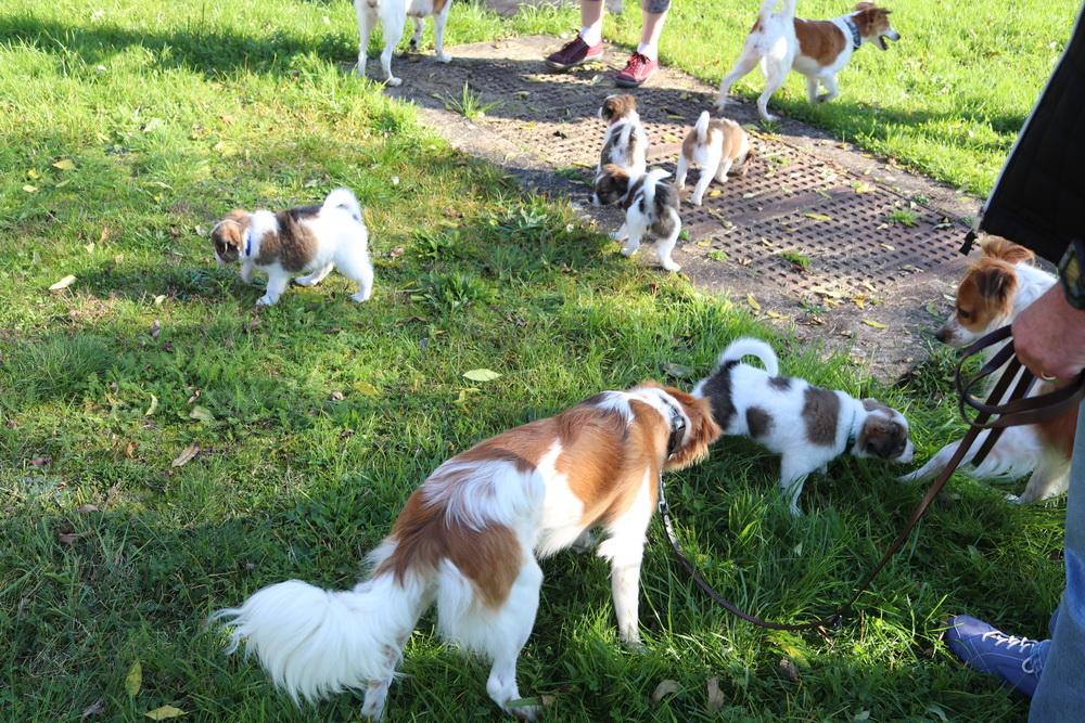Zu Besuch beim B Wurf vom Licher Turm, fünf tolle Hundebabies, 3 Cousinen und 2 Cousins
