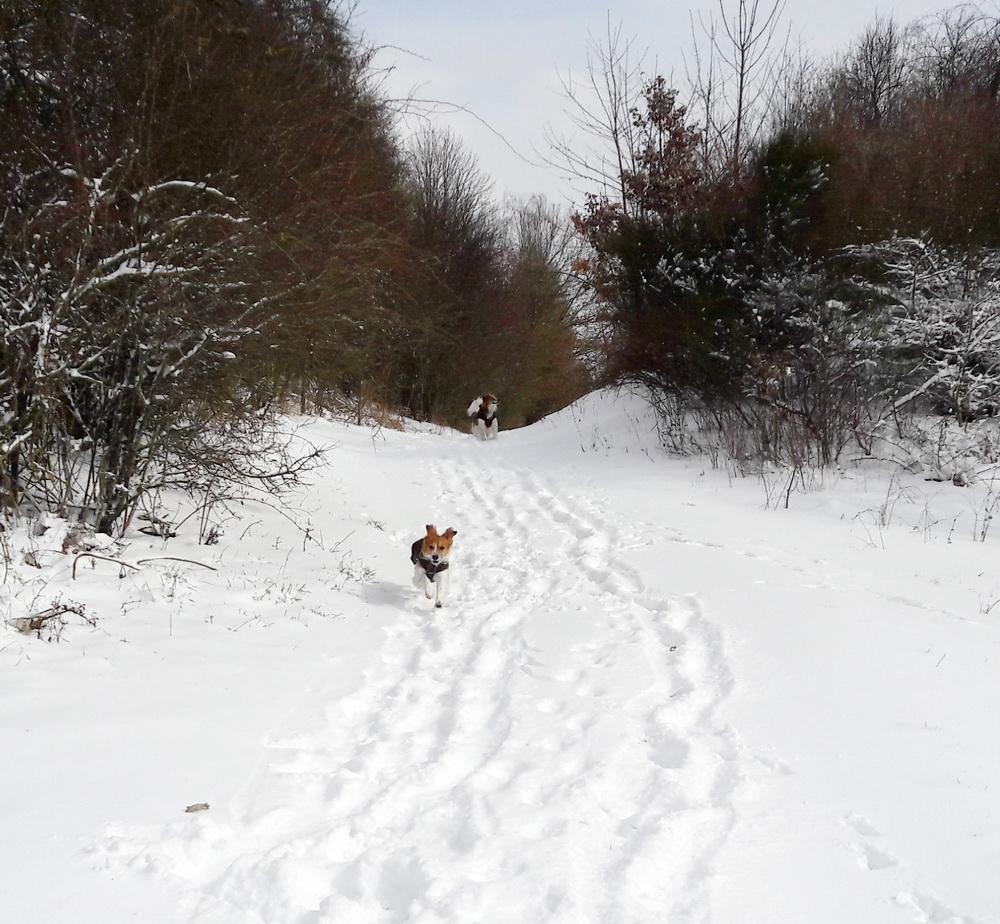 Nochmal Schneespaß