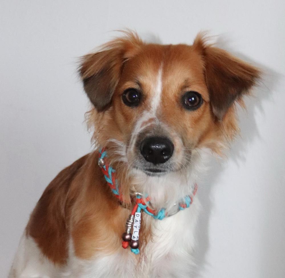 Dayla hat ein wunderschönes neues Halsband von www.moba-dogs.de