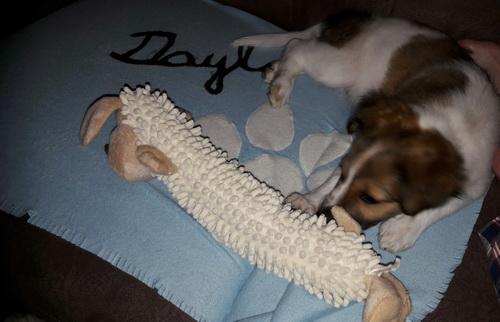 der tolle lange Hund ist von der lieben Kirstin