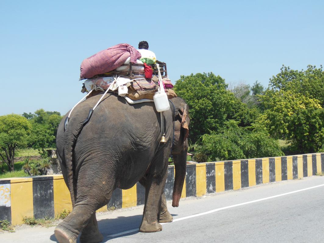 Oliver Rosenfeld war unterwegs zwischen Pushkar und Udaipur, Indien: »Schadstofffrei und zuverlässig – ein optimales Transportmittel.«