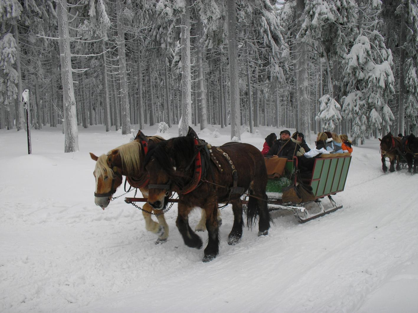 Wolfgang Holland war im Thüringer Wald.: »Eine Schlittenfahrt am Neujahrsmorgen vertreibt den stärksten Silvesterkater.«