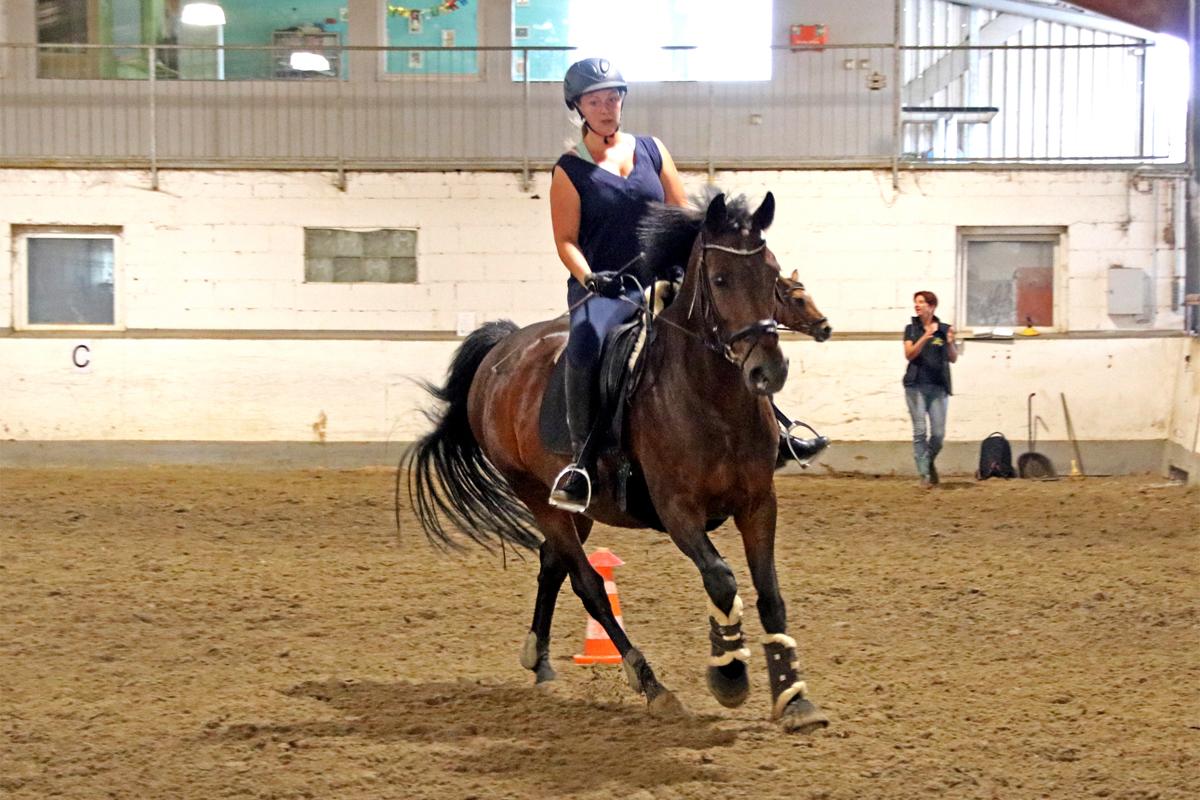 Neuer Kurs: Western Horsemanship