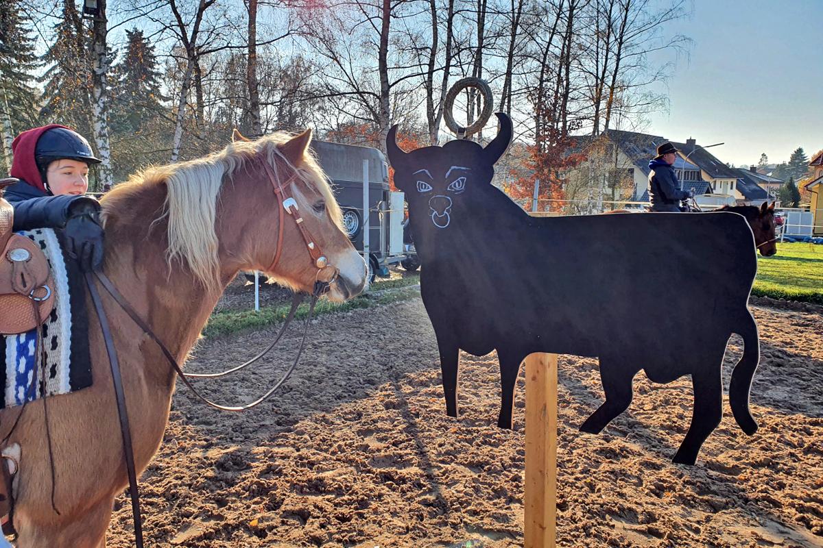 Neuer Kurs: Working Equitation