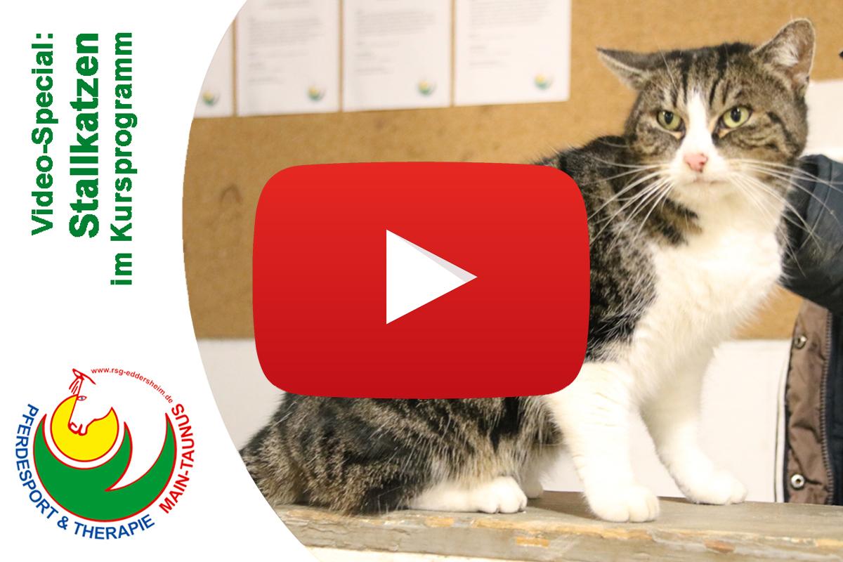 """Neues Video: """"Cat Content"""""""