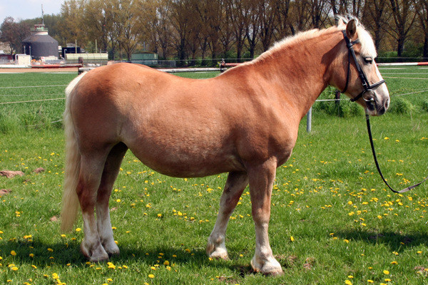 Flora, 1990 geboren, war ebenfalls zuerst als Privatpferd Bewohnerin des Wiesenhofs. Im Januar 2006 ging es für sie in den Reitschulbetrieb, den sie im Sommer 2009 aus gesundheitlichen Gründen wieder verließ.