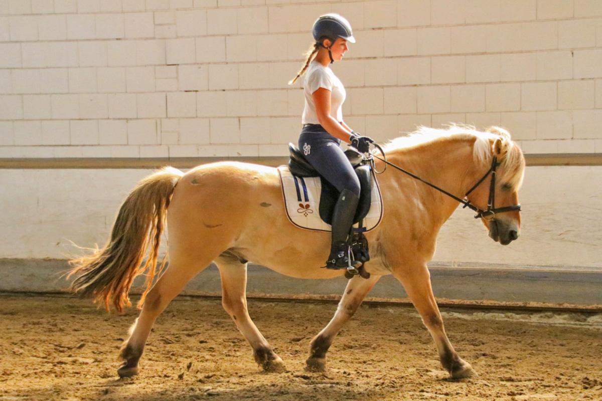 Neue Pferde, neue Reiter
