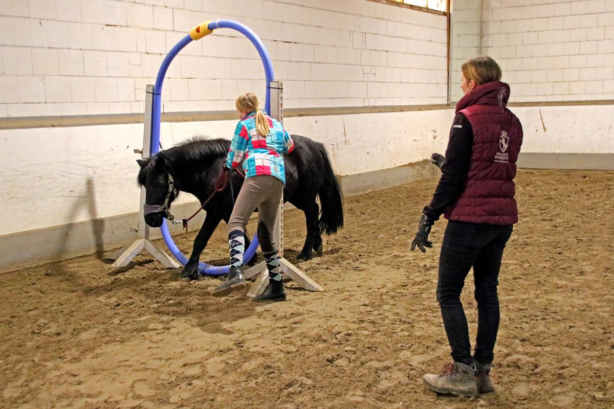 Neue Kurse: Horse-Agility