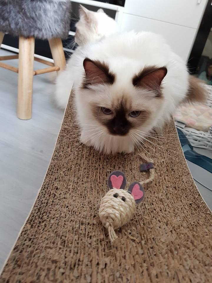 Das Mäuschen wird hypnotisiert.