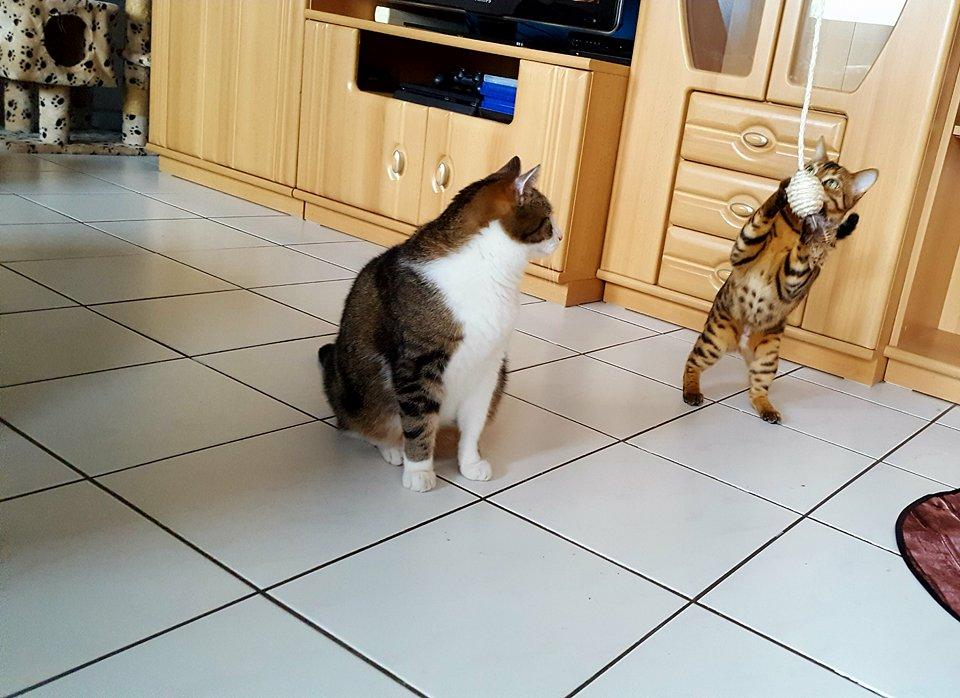 """"""" Ich bin größer als Du glaubst, Angel!"""""""