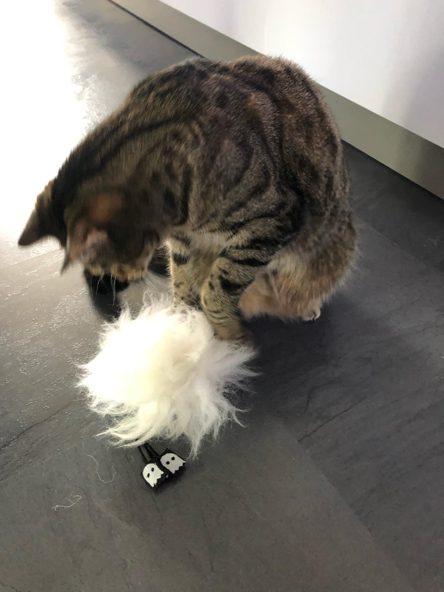 """""""Hallo Meow Boo. Lass dich mal anschnuffeln."""""""