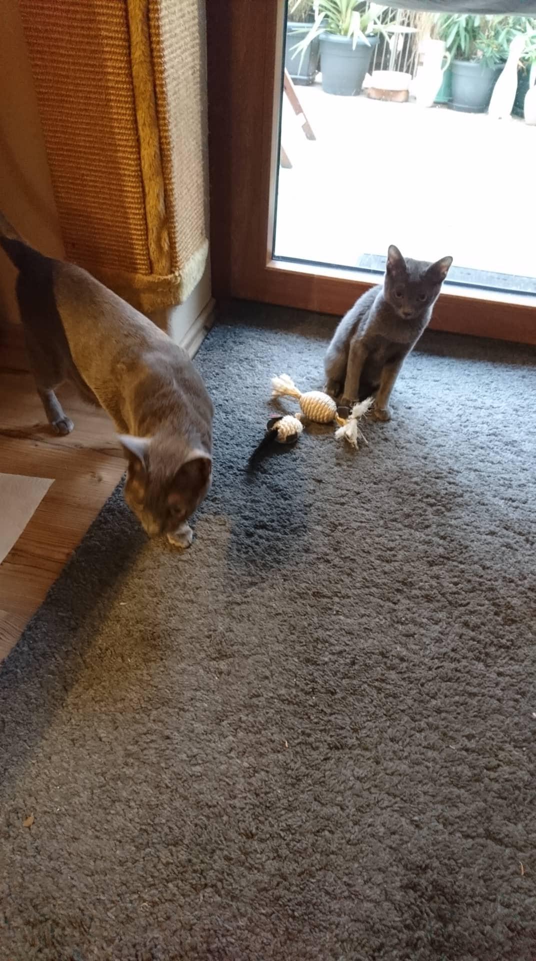 """""""Ich bring dir auch noch eben das Mäuschen."""""""