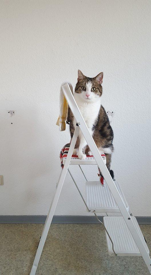 """""""Ich schau mir das lieber von oben aus an."""""""