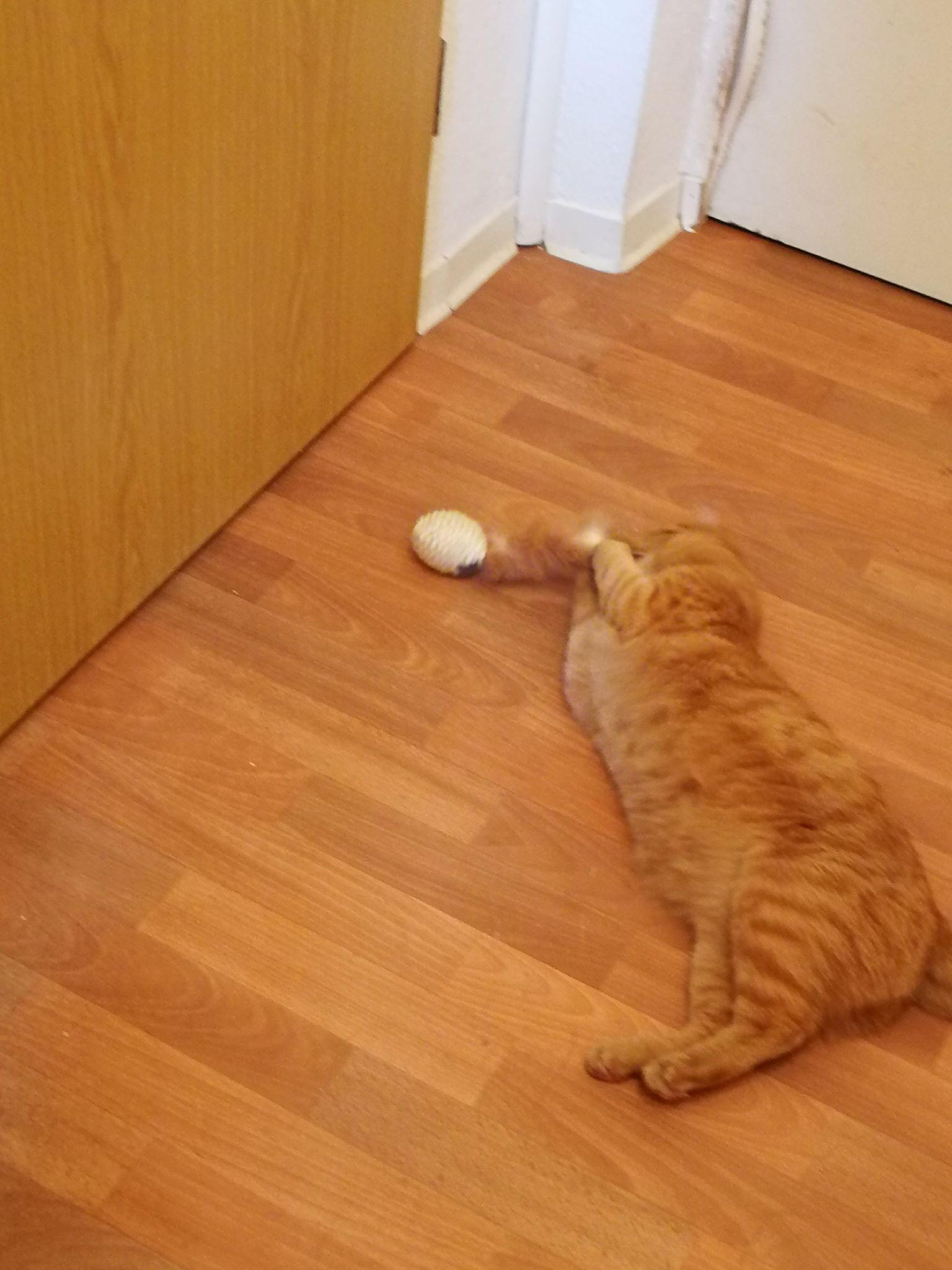 """""""Ich kuschel das Kaninchenfell einfach weiter."""""""