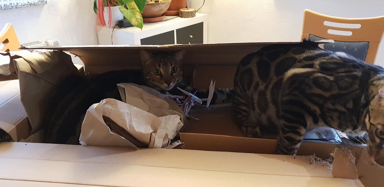 """Huch da ist noch was anderes drin!"""