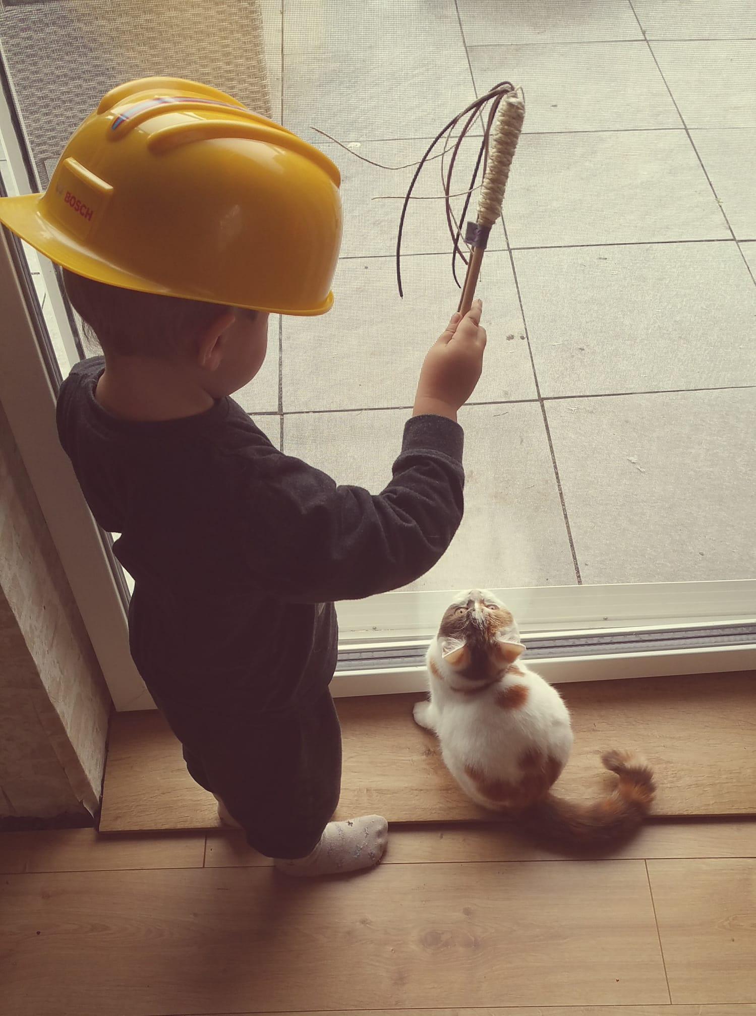 Früh übt sich, wer Katzen trainieren will!