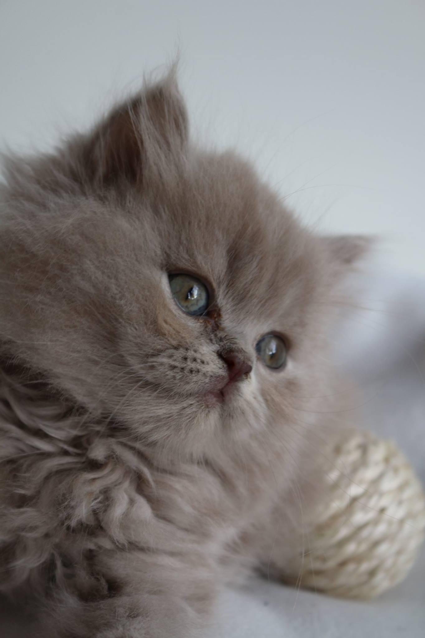 So wunderschöne Augen.
