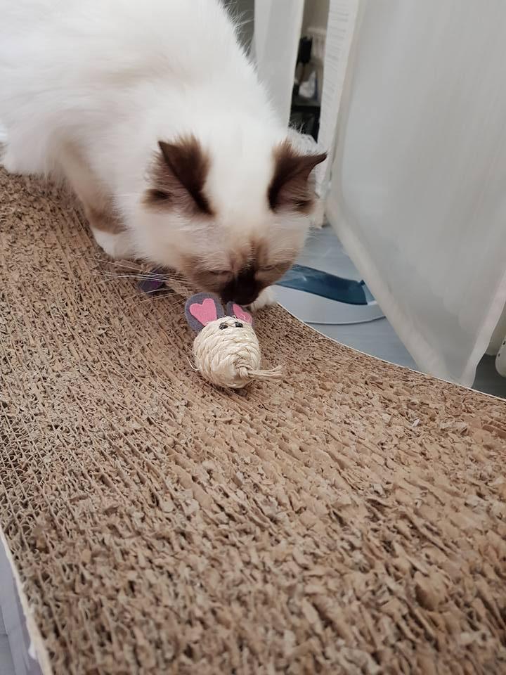 Lizza begutachtet ihr Mäuschen.