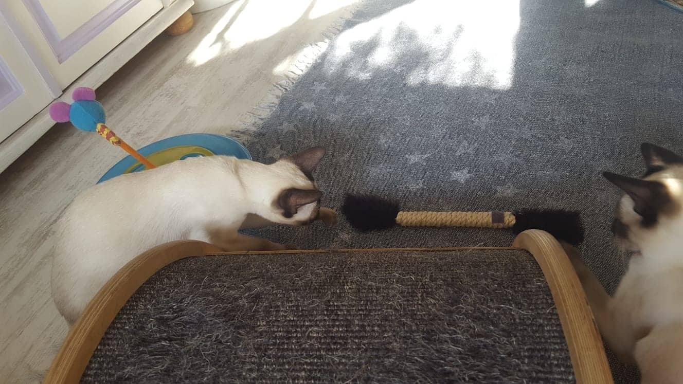 Der erste Kontakt von einem Kitten. <3