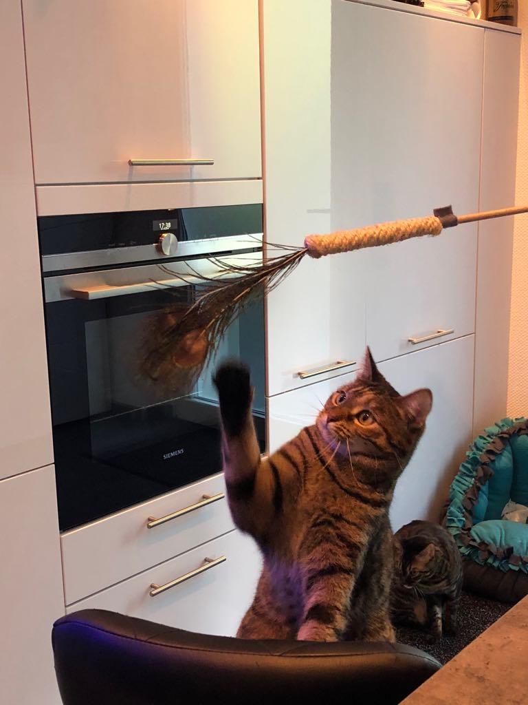 """""""Oh ja- Wir spielen mit dem Stab."""""""