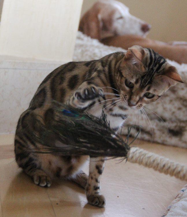 Die Federn werden erstmal vorsichtig angetatzt!