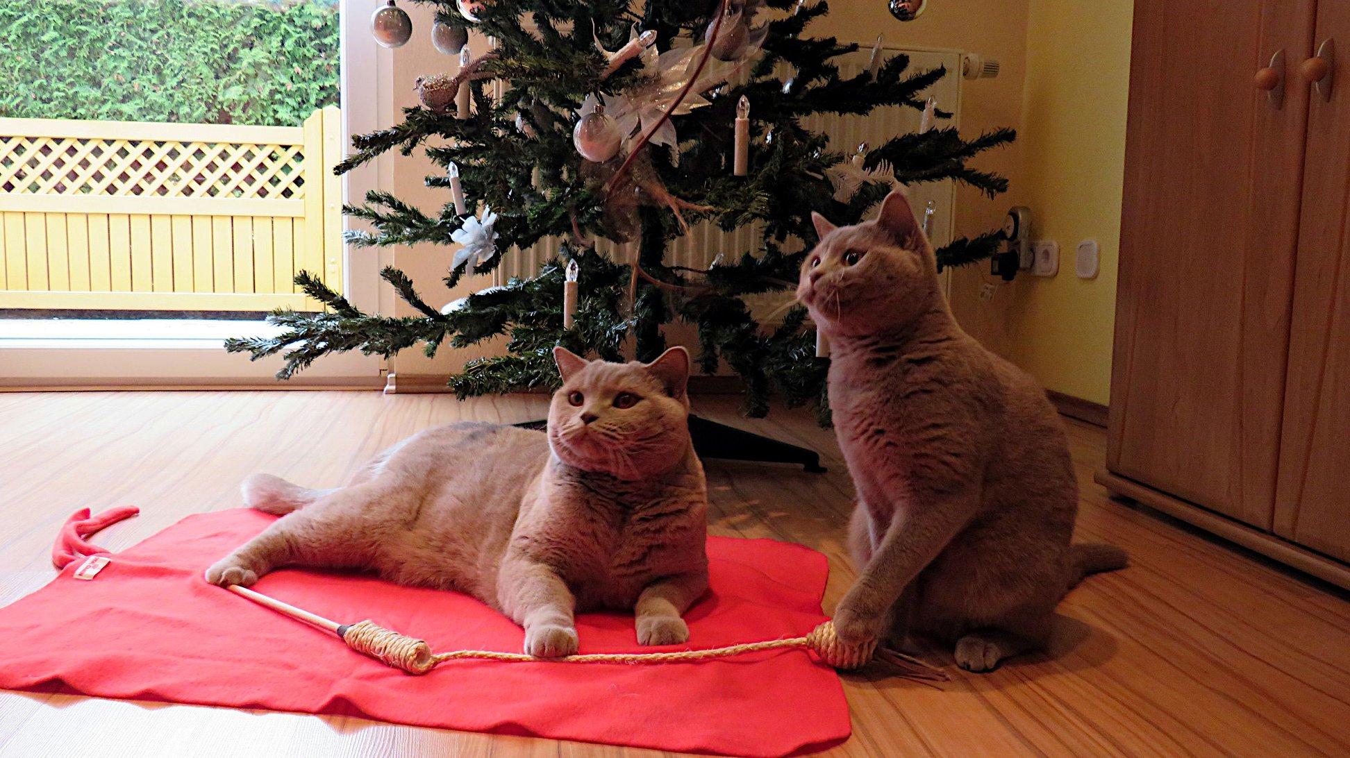 """""""Danke für die tollen Geschenke, Frauchen."""""""