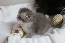 Super süßes Mini-Katzi! <3