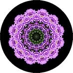 Mandala aus einer lila Dahlie mit schwarzem Hintergrund, Dahlienmandala