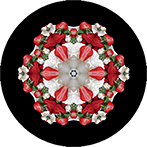 Mandala aus einer Erdbeertorte mit schwarzen Hintergrund, Erdbeertortenmandala