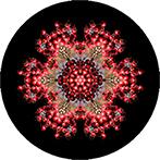 Mandala aus roten Beeren mit schwarzem Hintergrund, Beerenmandala