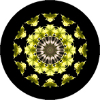 Mandala aus grünen Blättern, Blattmandala