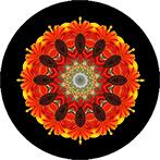 Mandala aus einer roten Sonnenblume, Sonnenblumenmandala