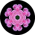 Mandala aus Rosen, Rosenmandala