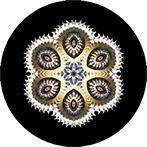 Mandala aus einem Schneckenfossil, Schneckenfossilmandala