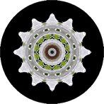Mandala mit einer weissen Blüte vom Taubenbaum,Taubenbaumblüte,Taubenbaumblütenmandala