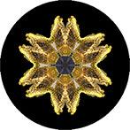 Mandala aus einer Zaunflechte, Zaunflechenmandala