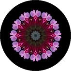 Mandala aus Rhododendronblüten mit schwarzem Hintergrumd, Rhododendronmandala